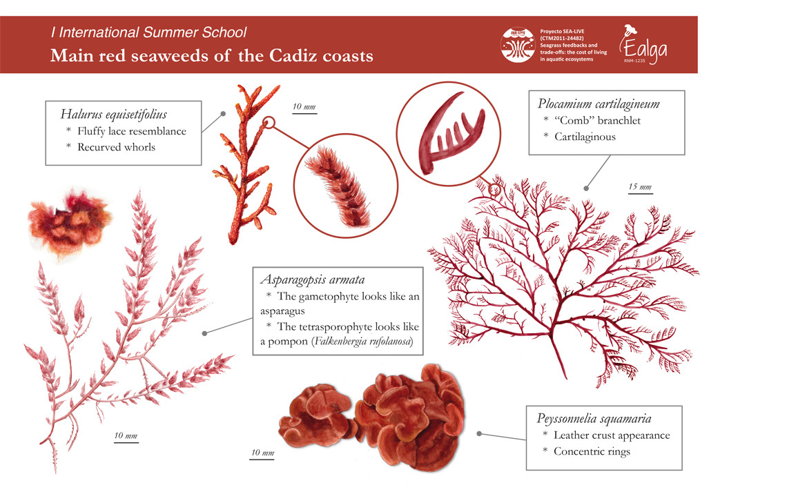 I International Summer School - Red algae